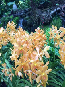 Orchid in the National Orchid Garden
